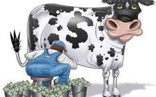 Замена молока денежной компенсацией в 2020 году как оформить