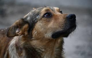 Как написать заявление на хозяина собаки через госуслуги