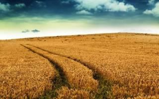Как взять землю в аренду у государства