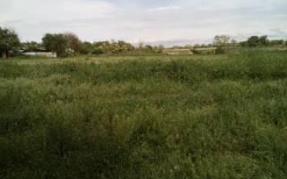 Выписка из ЕГРН на земельный участок как получить образец 2020