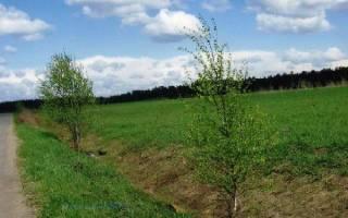 Как приватизировать землю — рассмотрим различные варианты