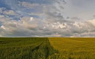 Что делать, если границы земельного участка не установлены